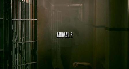 animaltitle
