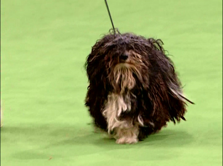 DVD REVIEW: 131ST WESTMINSTER KENNEL CLUB DOG SHOW | CHUD.com