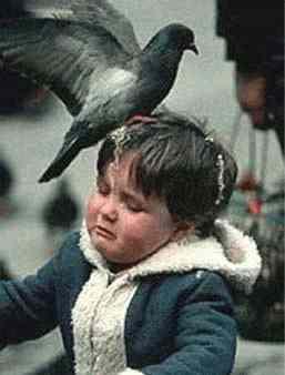 http://chud.com/nextraimages/bird-shit-kid.jpg