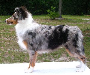 http://chud.com/nextraimages/puppy.jpg
