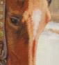 horsedumb