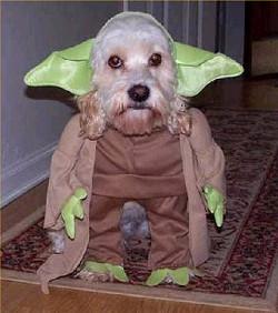 2_5_Yoda