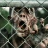 Walking Dead Arrow on the Doorpost zombie
