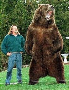 The original Bart The Bear