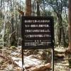 aokigahara-sign