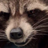 rocket-raccoon-test