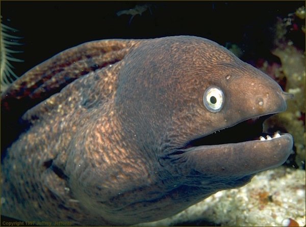 eel_face