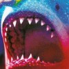 Shark Attack feature