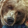 bart_bear