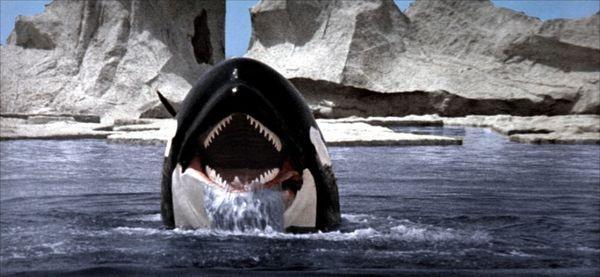 orca_600
