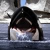 whale-spyhop